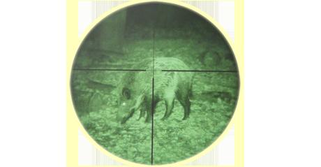 Jagen im ausland mit nachtsichtgerät